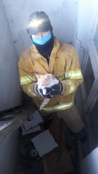 врятували кошеня в Івано-Франківську