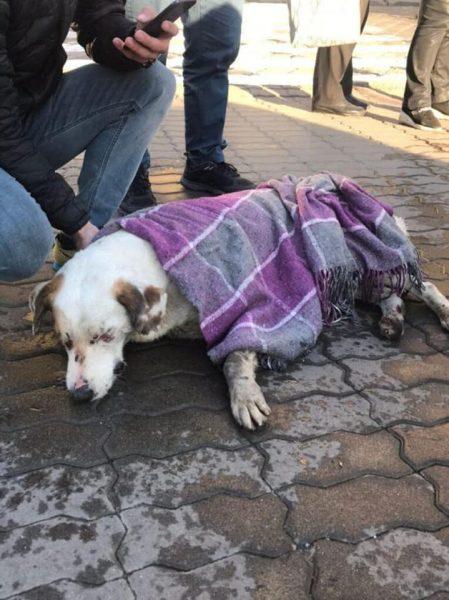 У Франківську продовжується отруєння собак (ФОТО) - ПІК ПІК